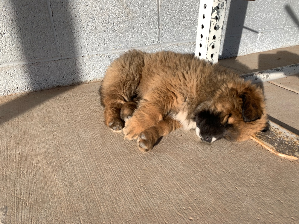 Puppy sleeping in the warm sunlight